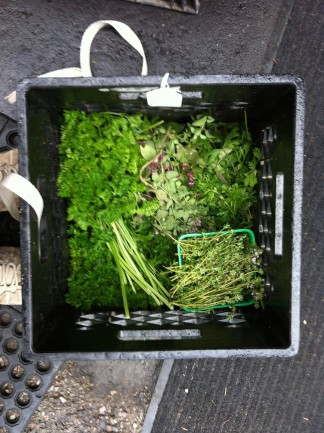 parsley, thyme, oregano, coriander!
